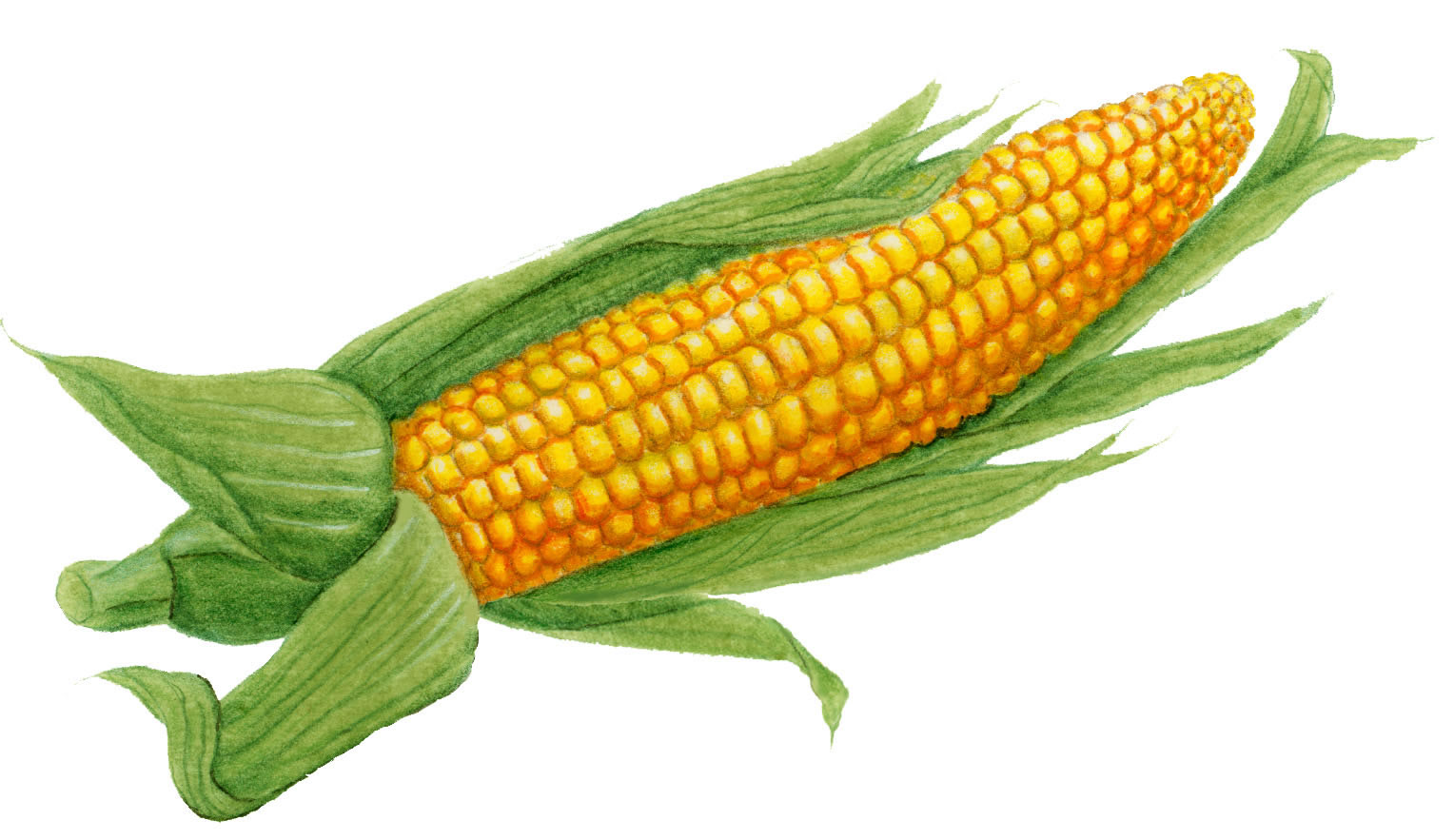 Vegetables - Seafood -The World's Healthiest Foods: Corn